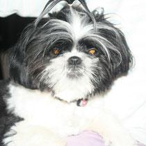 GUIZMO - 10 mois : Adopté le 28 Mars 2012