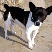 FLAC - 4 ans : Adopté le 16 Mars 2011