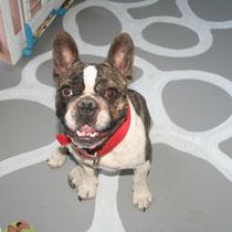 BOUBA - 2 ans : Adopté le 24 Juillet 2012