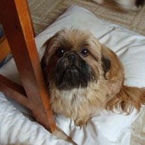 CHAOLING - 5 ans : Adoptée le 23 Janvier 2013