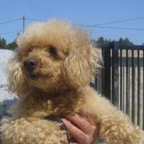 DOLLY - 12 ans : Adoptée le 21 Mai 2011