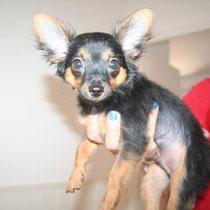 JAZZ - 4 mois : Adopté le 17 Juillet 2014