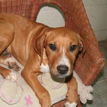 HARLEY - 5 mois : Adopté le 7 Janvier 20111