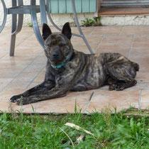 WILLYS - 3 ans : Adopté le 23 Janvier 2014
