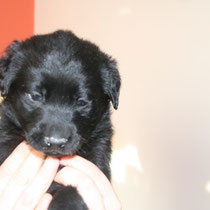 MALIBU - 2 mois : Adopté le 30 Janvier 2010