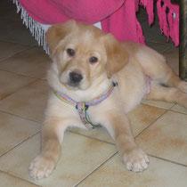 SODA - 2 mois : Adopté le 7 Février 2010