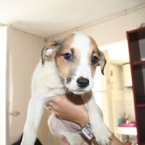MOKA - 2 mois : Adoptée le 20 Aout 2009