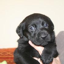TONIC - 2 mois : Adopté le 3 Février 2010