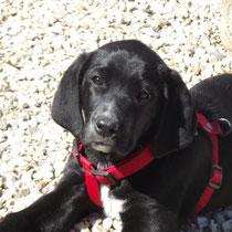HINDY - 4 mois : Adoptée le 21 Mars 2012