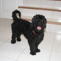 SONY - 4 ans : Adopté le 11 Juin 2009