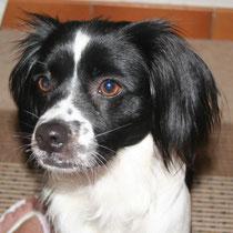 AVRIL - 1 an : Adoptée le 7 Aout 2008