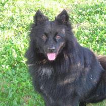 YODA - 3 ans : Adopté le 2 Aout 2010