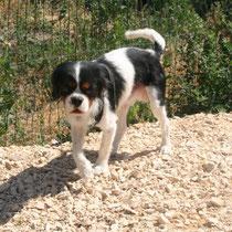NEO - 2 ans : Adopté le 11 Juillet 2014