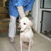 KIKI - 6 ans : Adopté le 30 Novembre 2008
