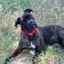 TSOURA - 5 ans : Adoptée le 30 Juin 2013