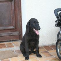 DRAKNAR - 3 mois : Adopté le 21 Juillet 2008
