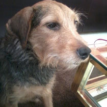 BOUNTY - 4 ans : Adoptée le 28 Décembre 2012