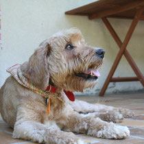 DJAMI - 3 ans : Adopté le 24 Juillet 2008