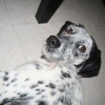 DIEGO - 2 ans : Adopté le 15 Janvier 2011