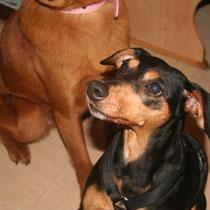 DOVE - 5 ans : Adoptée le 22 Mars 2013