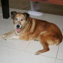 LUNA - 11 ans : Adoptée le 21 Juin 2009