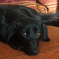 ZIVA - 11 mois : Adoptée le 7 Avril 2012