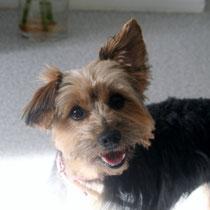 ZOE - 2 ans : Adoptée le 1er Décembre 2012