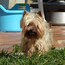 DAISY - 9 ans : Adoptée le 12 Mars 2014