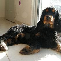 DAHOE - 2 ans : Adopté le 13 Mars 2010