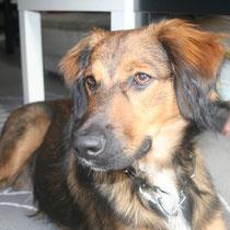 BONGO - 11 mois : Adopté le 7 Avril 2013