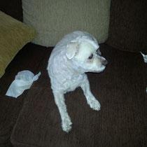 BELLA - 10 ans : Adoptée le 28 Août 2014