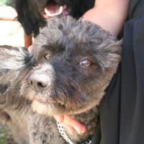BALOU - 2 ans : Adopté le 20 Juin 2009