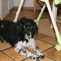 LOLA - 10 ans : Adoptée le 15 Juin 2008
