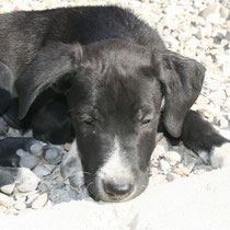 ELVIS - 2 mois : Adopté le 9 Septembre 2009