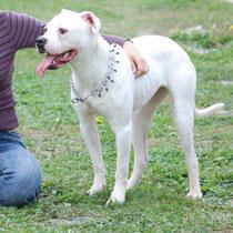 CHUPPA - 1 mois : Adoptée le 13 Novembre 2010