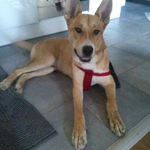 ROSCO - 2 ans : Adopté le 12 Novembre 2013