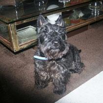 TIBO - 5 ans : Adopté le 22 Novembre 2012