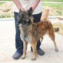 BAHIA - 5 ans : Adoptée le 24 Septembre 2012