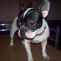 CHELSEA - 3 ans : Adoptée le 2 Mai 2010