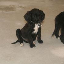 JEDAÏ - 3 mois : Adopté le 20 Septembre 2014