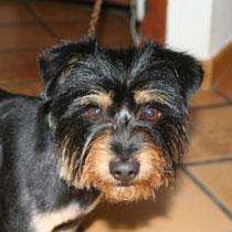 COKA - 3 ans : Adopté le 14 Mai 2008