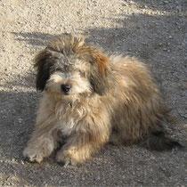 JOK - 10 mois : Adopté le 14 Mars 2010