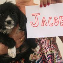 JACOB - 3 mois : Adopté le 21 Septembre 2014