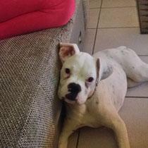 MILA - 4 mois : Adoptée le 19 Novembre 2015