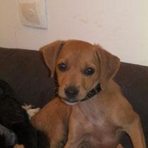 CANDY - 3 mois : Adoptée le 18 Aout 2011