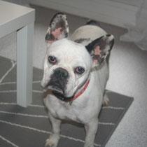 KOUKI - 3 ans : Adoptée le 15 Décembre 2012
