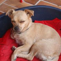 LILI - 3 ans : Adoptée le 16 Aout 2008
