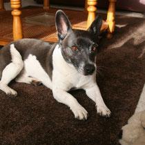 FLAC - 7 ans : Adopté le 4 Août 2012