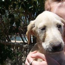 DOLLY - 4 mois : Adoptée le 15 Juillet 2008