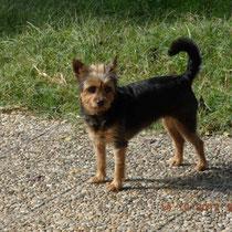LILY - 2 ans : Adoptée le 5 Décembre 2012